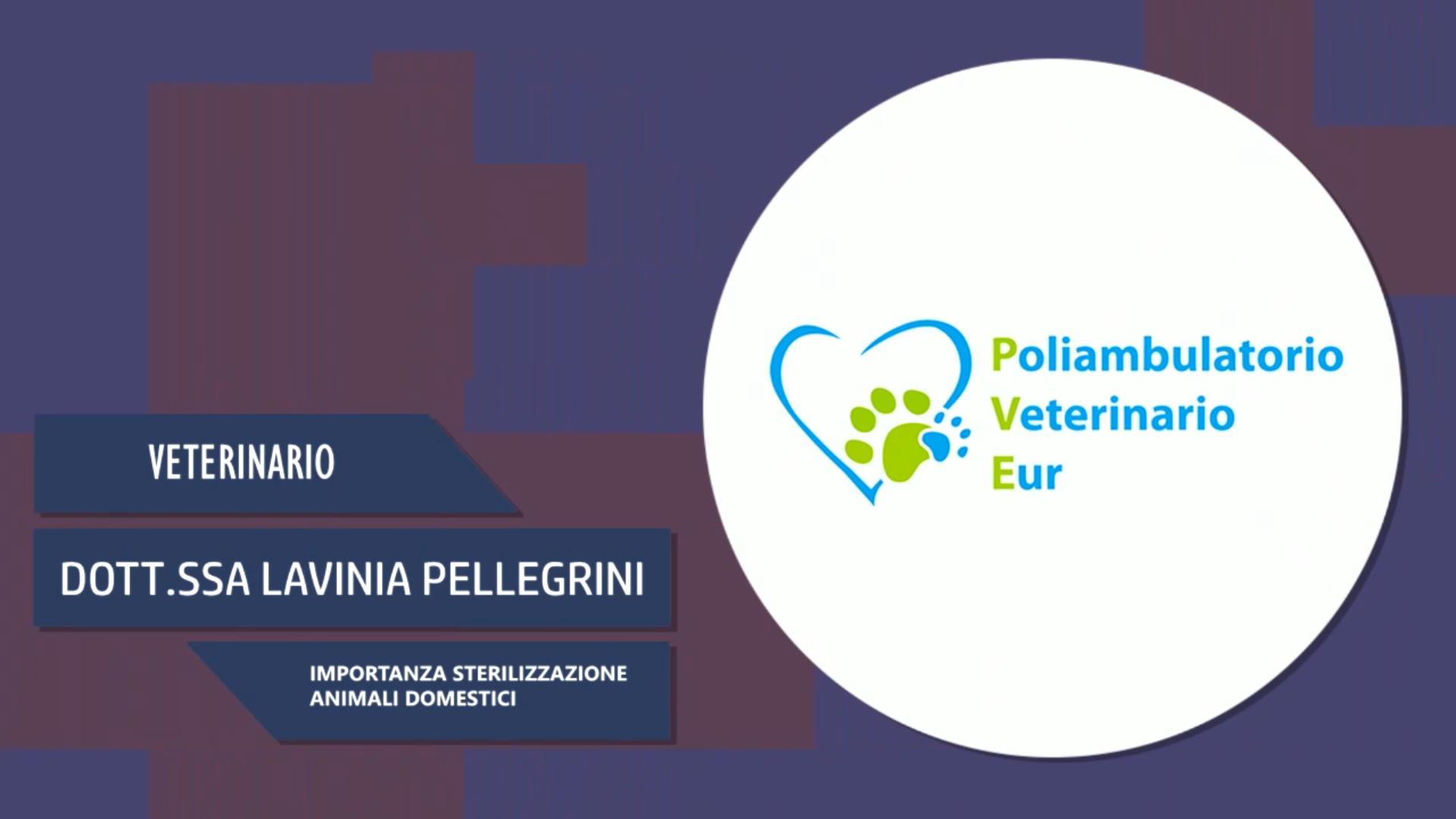 Intervista alla Dott.ssa Lavinia Pellegrini – Importanza sterilizzazione animali domestici