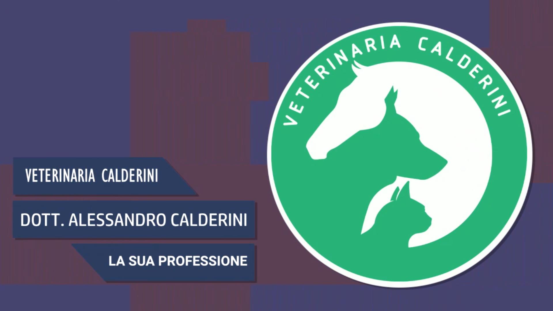 Intervista al Dott. Alessandro Calderini – La sua professione